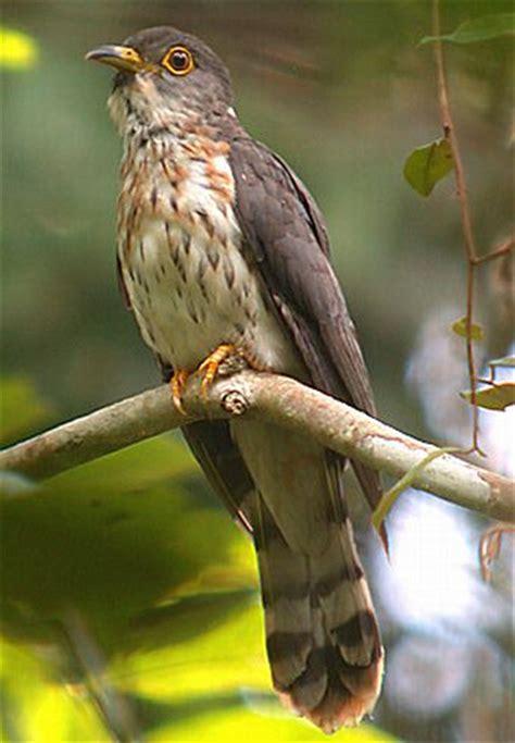 Tempat Pakan Burung Puter foto gambar burung