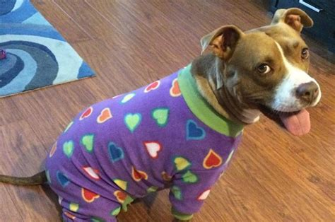 puppies in pajamas literally just 23 pictures of dogs in pajamas