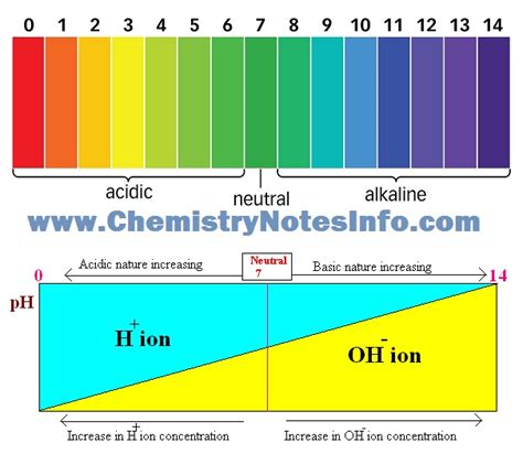 acid base ph scale 10 class acids bases and salts chemistry notes info