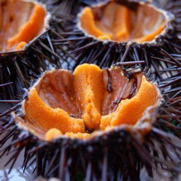 alimentazione riccio alla scoperta prelibato riccio di mare fresco pesce