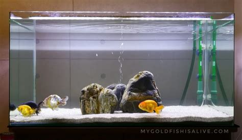 aquarium design basics setting up a goldfish tank part 1 the 8 most basic
