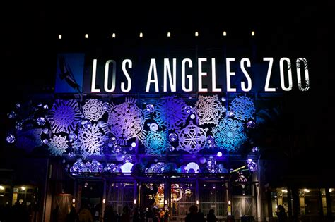 Get Glowing To These 10 Sparkly Displays Of Holiday Lights Philadelphia Zoo Lights