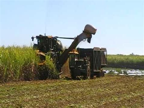 what is a cane row incredible double row cane harvester youtube