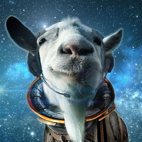 Waste Of Space Mba 3 by Goat Simulator Waste Of Space Iphone最新人気アプリランキング Ios App