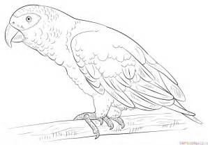 african grey parrot coloring pages coloring pages