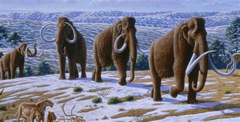 animal during great ice age quaternary period animals www imgkid com the image kid