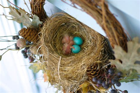 fun facts about nests cubs