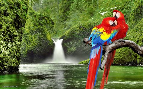 colorful macaw wallpaper macaw parrot wallpapers wallpaper cave