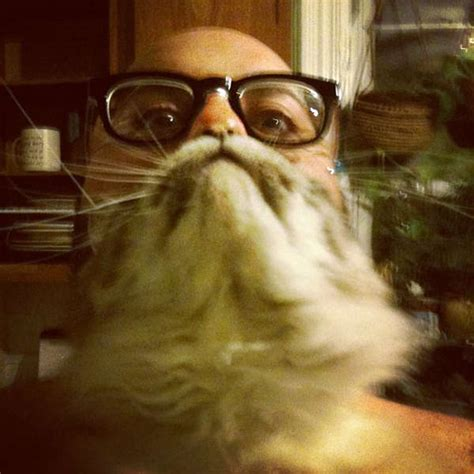 Cat Beard Meme - feline facial memes cat beards