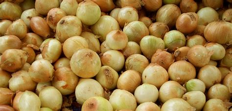 Garden Fresh Foods by Garden Fresh Foods Recalled Onions Unsafe Products