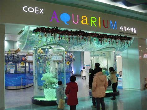 101 Korean Shopping Guide Oleh Kristie 入り口 picture of coex aquarium seoul tripadvisor