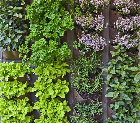 Incorporating An Edible Living Wall Beneva Plantscapes Living Wall Herb Garden