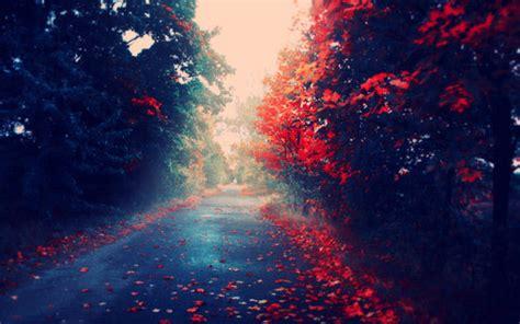 tumblr themes free beautiful beautiful photography random tumblr favim com 651646 flickr