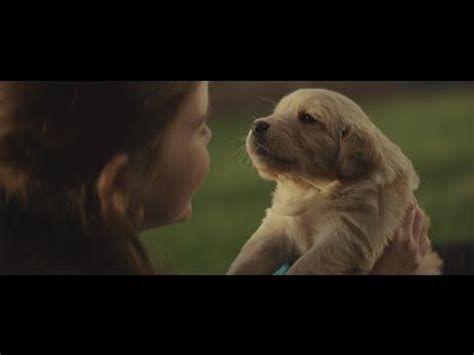 subaru golden retriever commercials 1000 images about commercials with dogs on cars lost and subaru