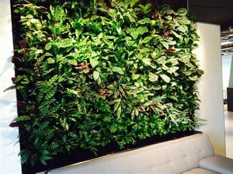 Klimplant Voor Binnen by Klimplant Binnen Beautiful Winterharde Klimplanten With