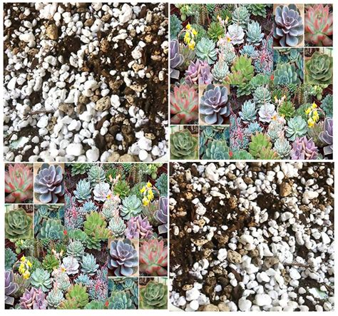 Soil Mix For Outdoor In Ground Succulents - cactus succulents soil mix by the quart your cacti and