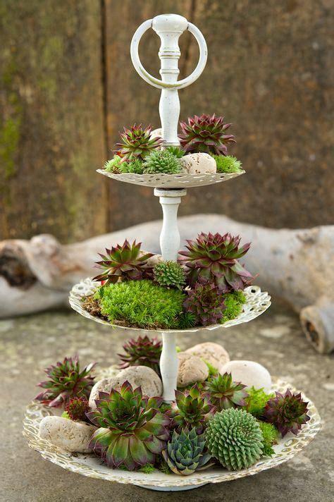Deko Ideen Dachterrasse 2201 by Die Besten 25 Sukkulente Garten Diy Indoor Ideen Auf