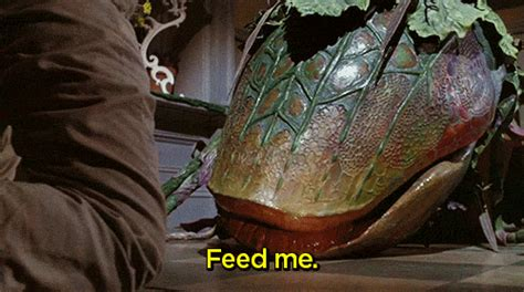 Feed Me Seymour Meme - feed me seymour gif 15 gif images download