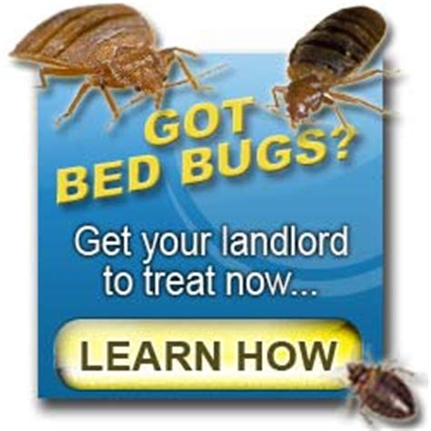 who is responsible for bed bugs landlord or tenant landlord bed bugs rpa tenant rights blog