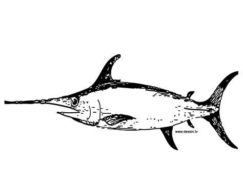 coloring swordfish