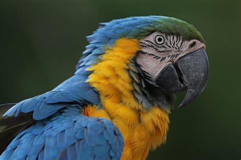 imagenes animales aves un nuevo estudio sugiere que hay unas 18 000 especies de