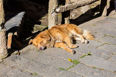 imagenes de animales wikipedia perro callejero animal wikipedia la enciclopedia libre