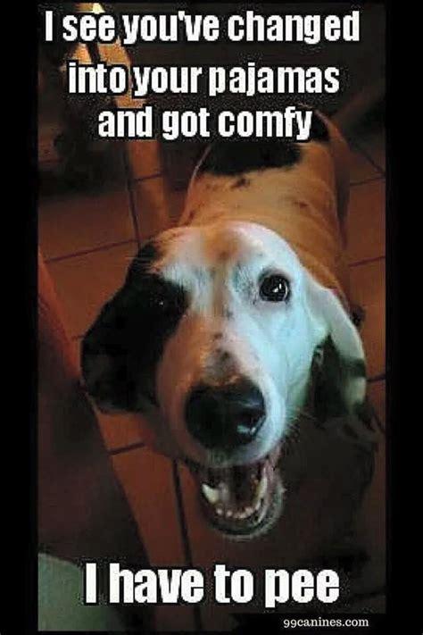 Pee Meme - funny dog have to pee meme