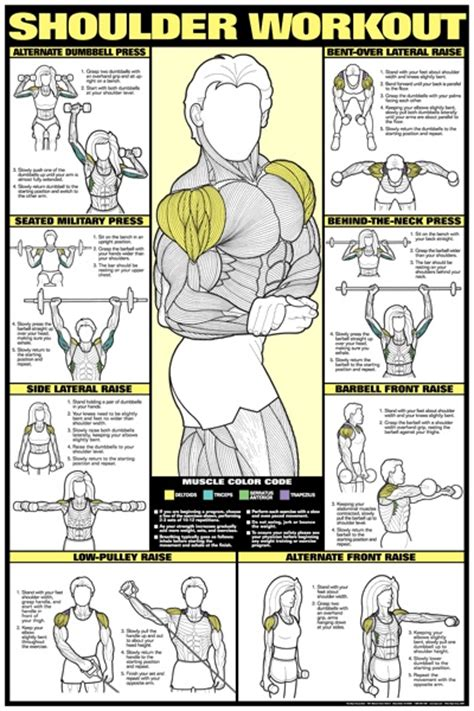 shoulder workouts all bodybuilding