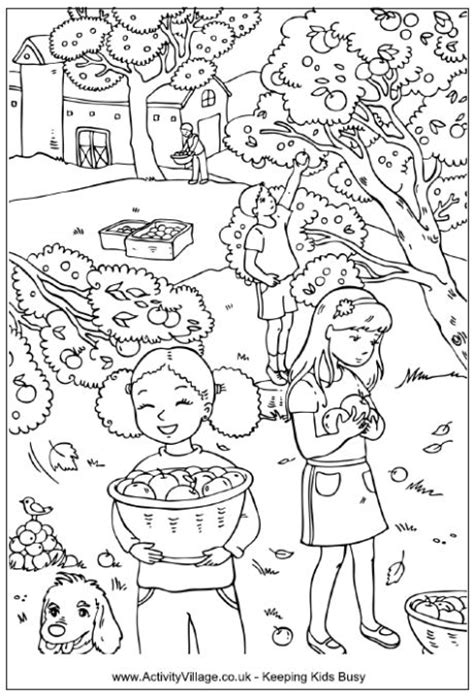 apple orchard coloring page picking apples colouring page children picking apples in