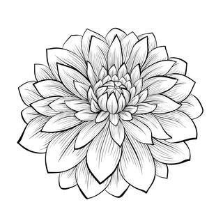 flower tattoo no black outline line drawing dahlia monochrome black and white