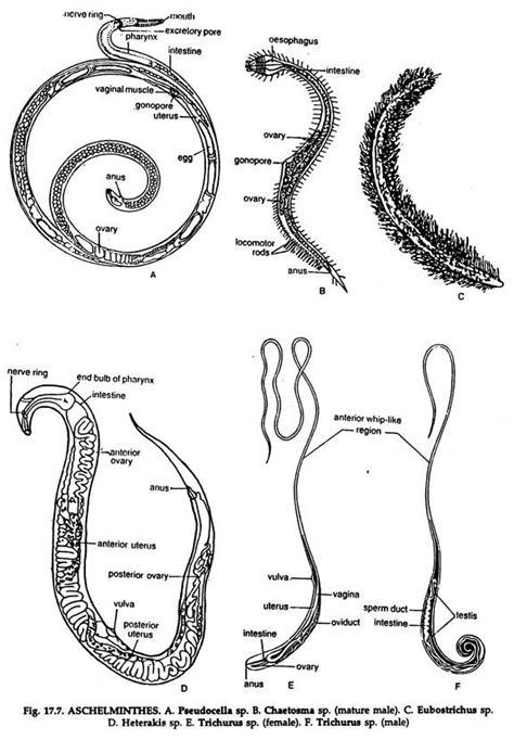 Subdivisions of the Kingdom Animalia   Zoology