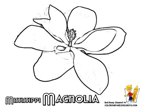 coloring pages of magnolia flowers states flower printables maine montana free flower