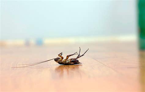 blatte rosse volanti veleno esche o gel per blatte e scarafaggi quale scegliere