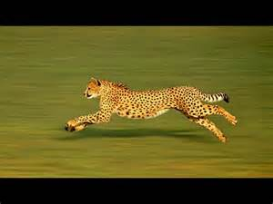 Worlds Fastest The Fastest 10 Animals In The World