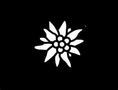 Edelweiss Pflanze Kaufen 484 die besten 25 edelweiss ideen auf gerahmten