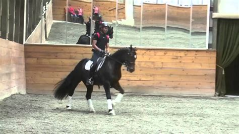 section d mhs magnestar section d welsh cob dressage sold youtube