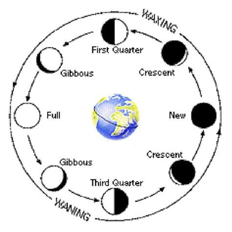 phases of the moon diagram for astronomy a beginner s guide to the moon owlcation