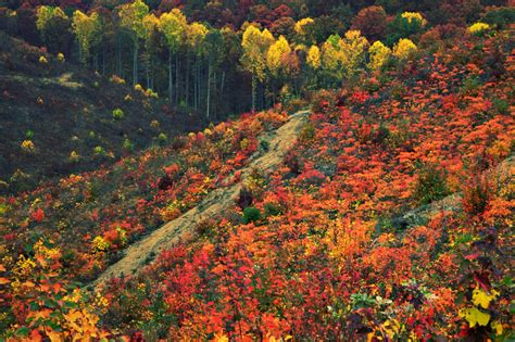 ohio colors the 10 best midwest foliage drives to leaf peep like a ch