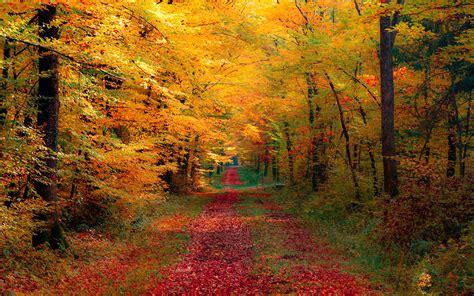 fall autumn autumn leaves falling background wallpaper