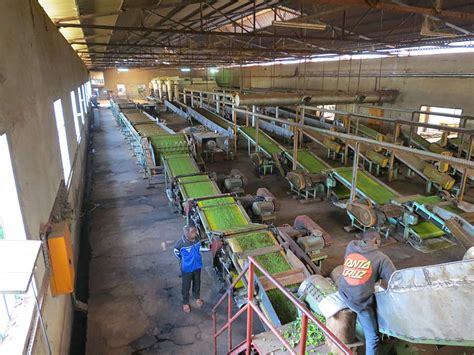 the cultivation and manufacture of tea classic reprint books file tea production step 2 processing of the dried tea
