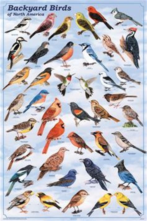 nc backyard birds eastern north carolina birds field guide style watercolor