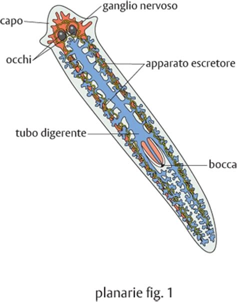 piccoli vermi bianchi in casa vermi e larve