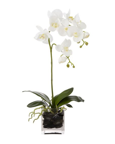 Vas Bunga Triangle Glass Vase white orchid in clear vase