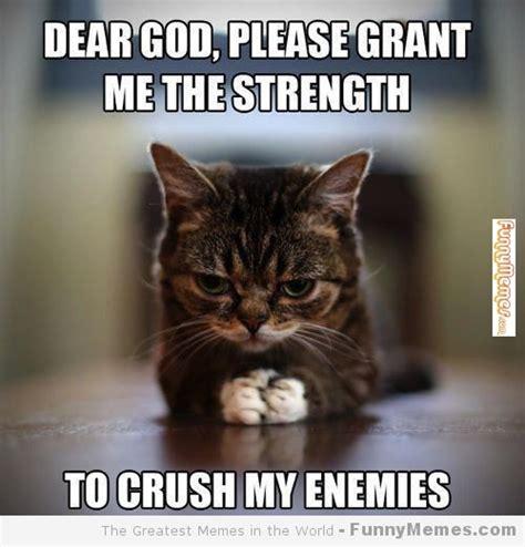 Cat Pics Meme - funny cat memes cat memes please grant me the