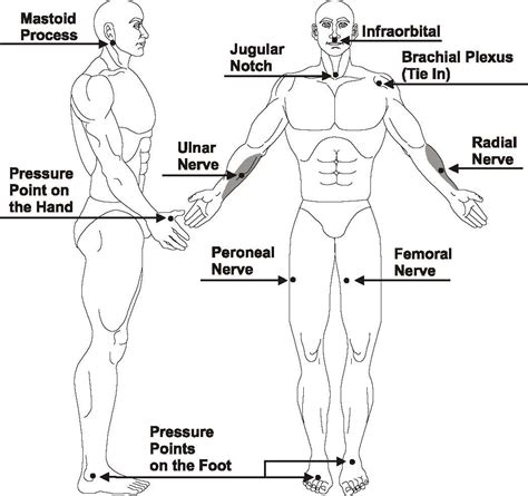 diagram of pressure points on the human shotokan karate diagram of fatal point of
