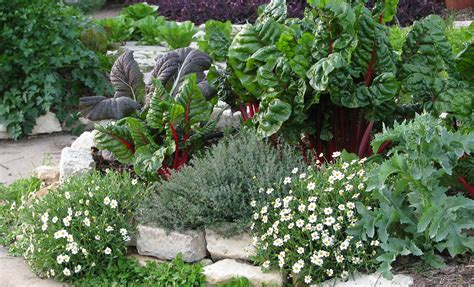 edible landscape design front yard garden post