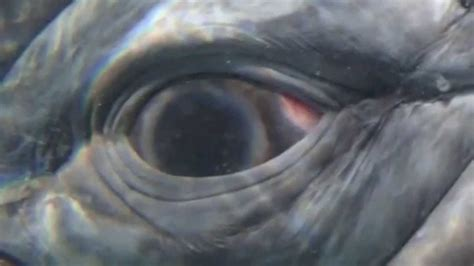 the eyes of the the eye of the whale youtube