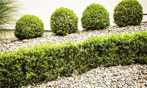 5 ideas for shaping your plants shrubs and trees smart tips
