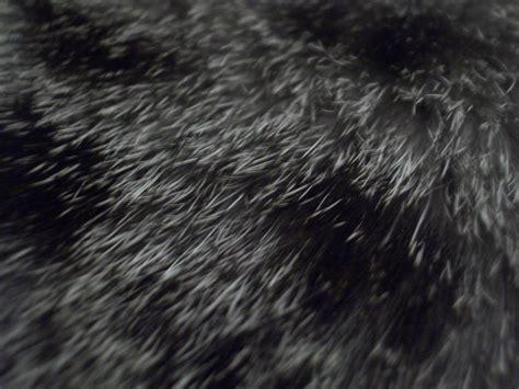 cat hair cat hair 2 image 500x375 pixels