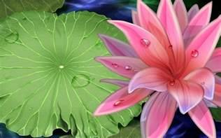 Free Lotus Free Wallpaper Best Lotus Flower Wallpaper
